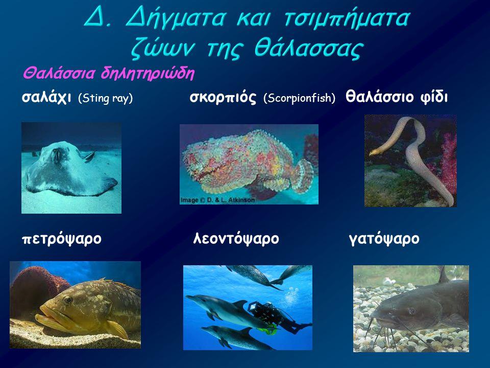 Θαλάσσια δηλητηριώδη σαλάχι (Sting ray) σκορπιός (Scorpionfish) θαλάσσιο φίδι πετρόψαρο λεοντόψαρο γατόψαρο