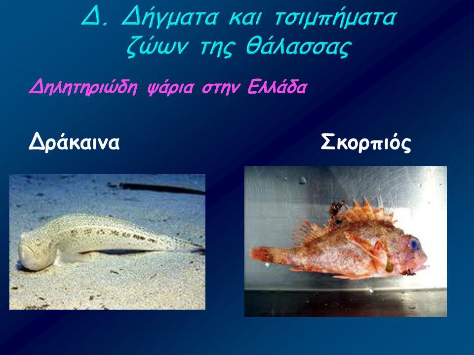 Δηλητηριώδη ψάρια στην Ελλάδα Δράκαινα Σκορπιός