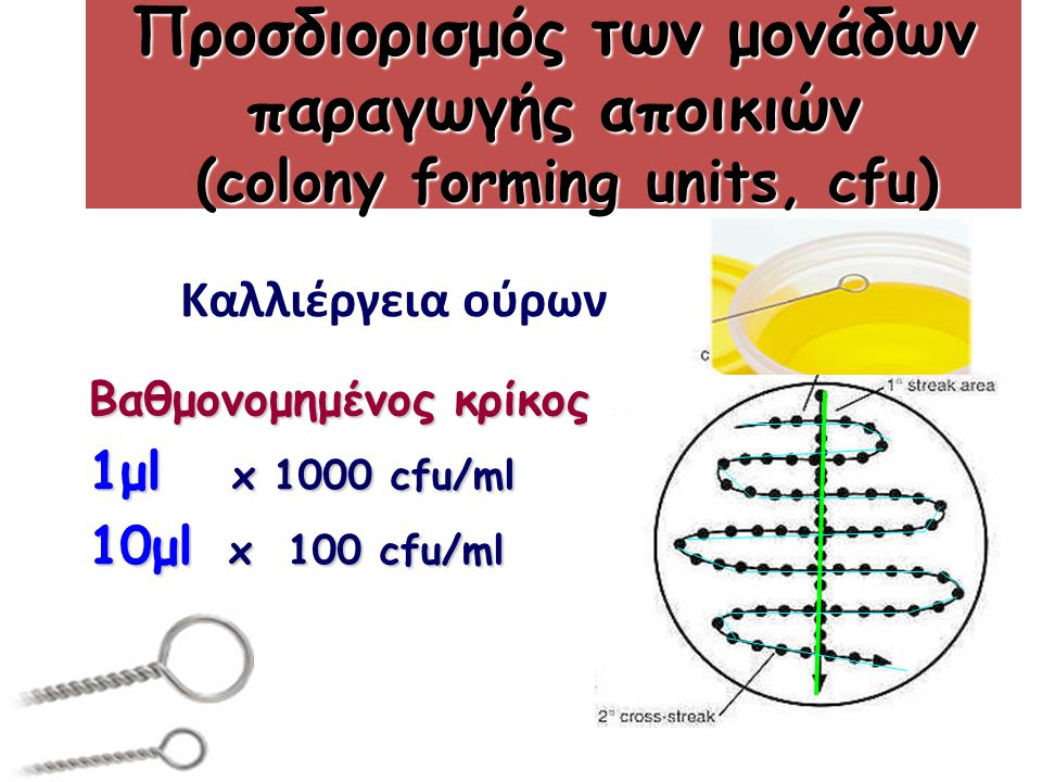 Προσδιορισμός των μονάδων παραγωγής αποικιών (colony forming units, cfu) Βαθμονομημένος κρίκος 1μl x 1000 cfu/ml 10μl x 100 cfu/ml Καλλιέργεια ούρων
