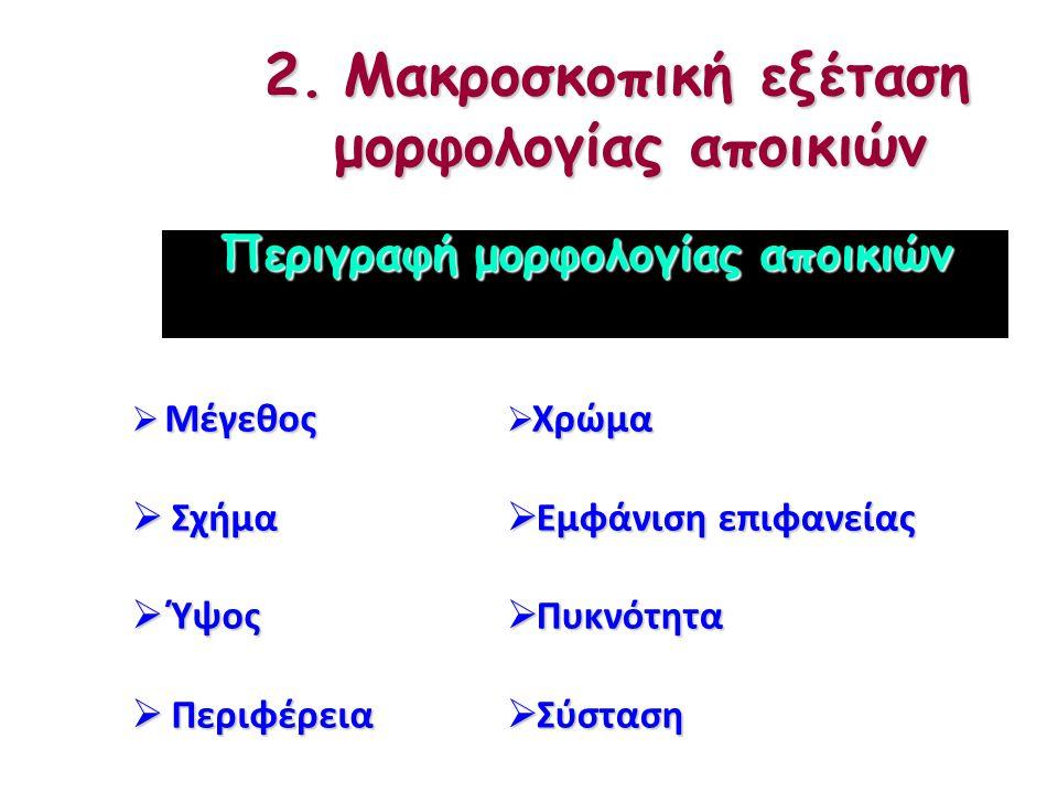 2.Μακροσκοπική εξέταση μορφολογίας αποικιών 2.