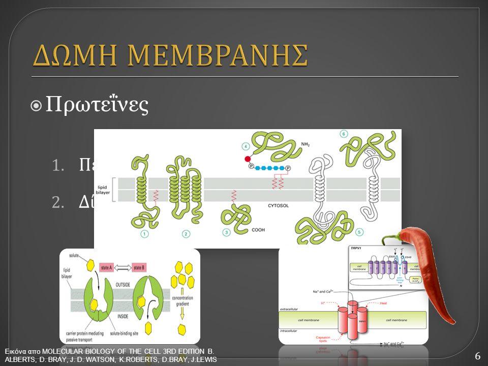 6  Πρωτεΐνες 1. Περμεάσες ( μεταφορικές πρωτεΐνες ) 2. Δίαυλοι Εικόνα απο MOLECULAR BIOLOGY OF THE CELL 3RD EDITION B. ΑLBERTS, D. BRAY, J. D. WATSON