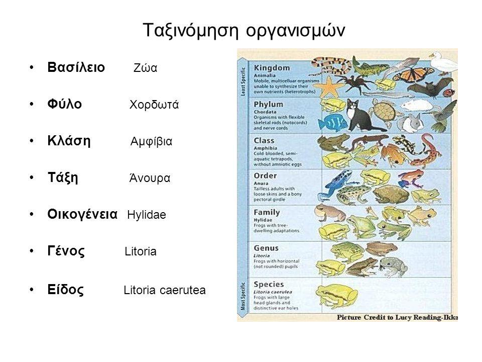 Ταξινόμηση οργανισμών Βασίλειο Ζώα Φύλο Χορδωτά Κλάση Αμφίβια Τάξη Άνουρα Οικογένεια Hylidae Γένος Litoria Είδος Litoria caerutea