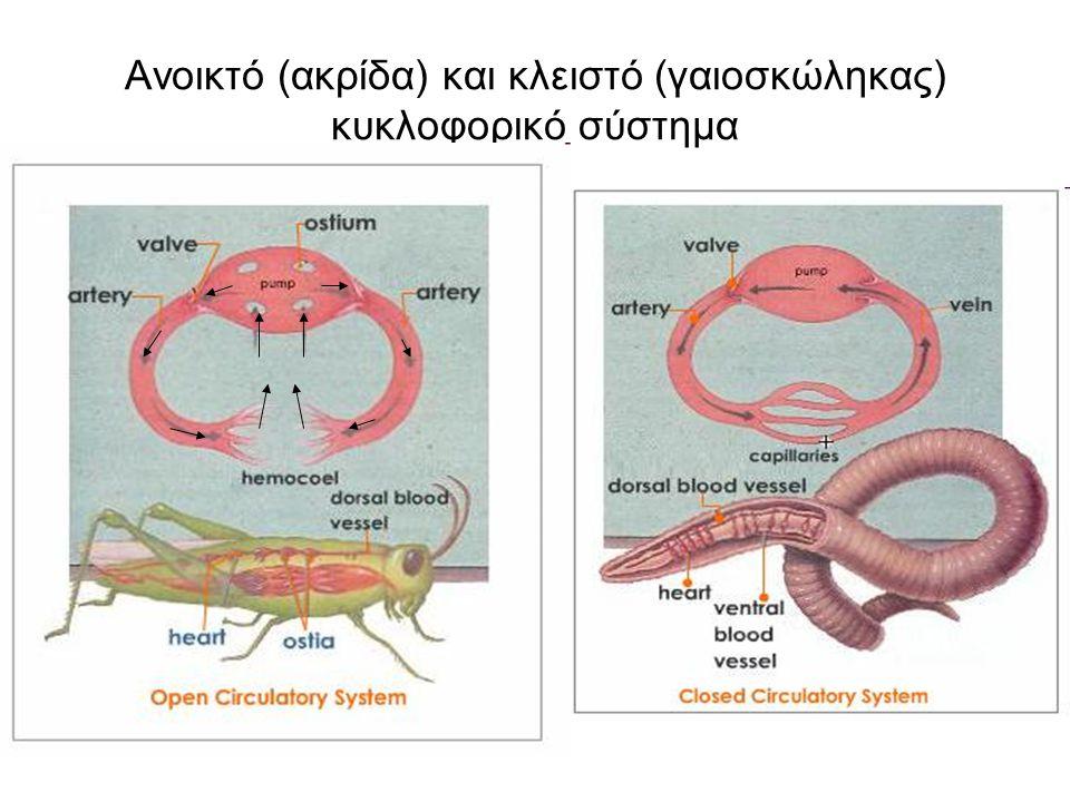 Ανοικτό (ακρίδα) και κλειστό (γαιοσκώληκας) κυκλοφορικό σύστημα