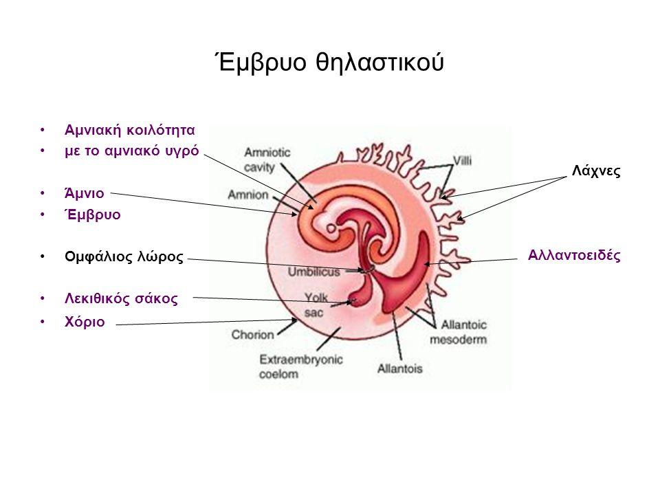 Έμβρυο θηλαστικού Αμνιακή κοιλότητα με το αμνιακό υγρό Άμνιο Έμβρυο Ομφάλιος λώρος Λεκιθικός σάκος Χόριο Λάχνες Αλλαντοειδές