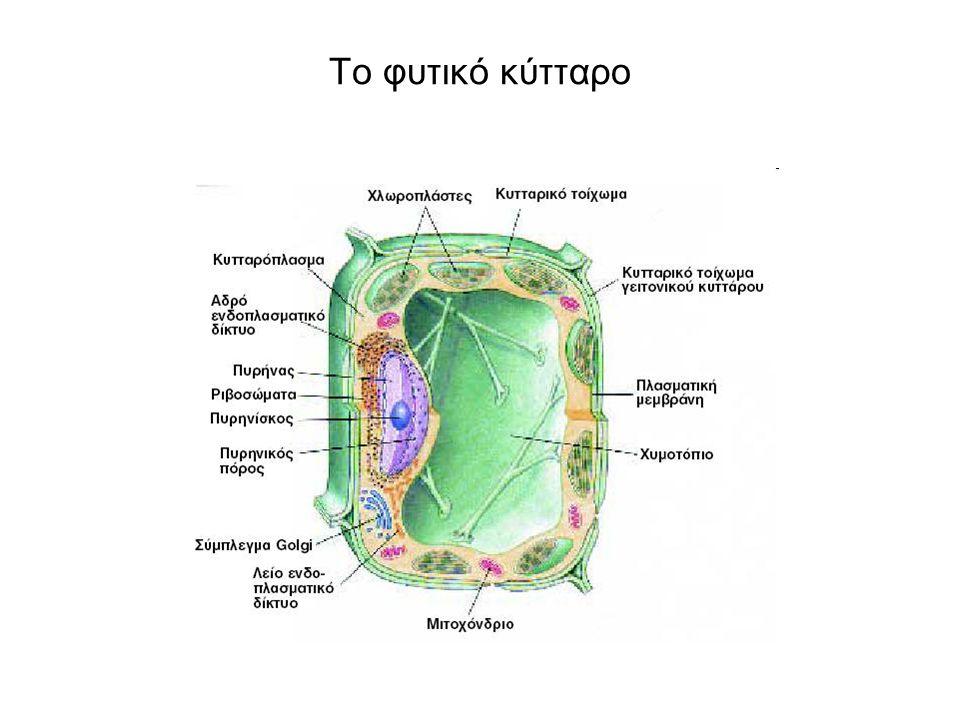 Το ζωικό κύτταρο