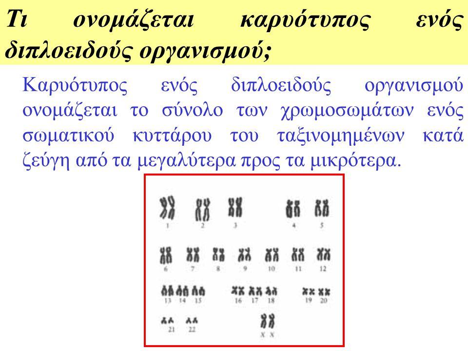 Πώς λέγονται τα χρωμοσώματα που ανήκουν στο ίδιο ζευγάρι χρωμοσωμάτων ενός διπλοειδούς κυττάρου, σε τι μοιάζουν, τι πληροφορίες περιέχουν και από πού