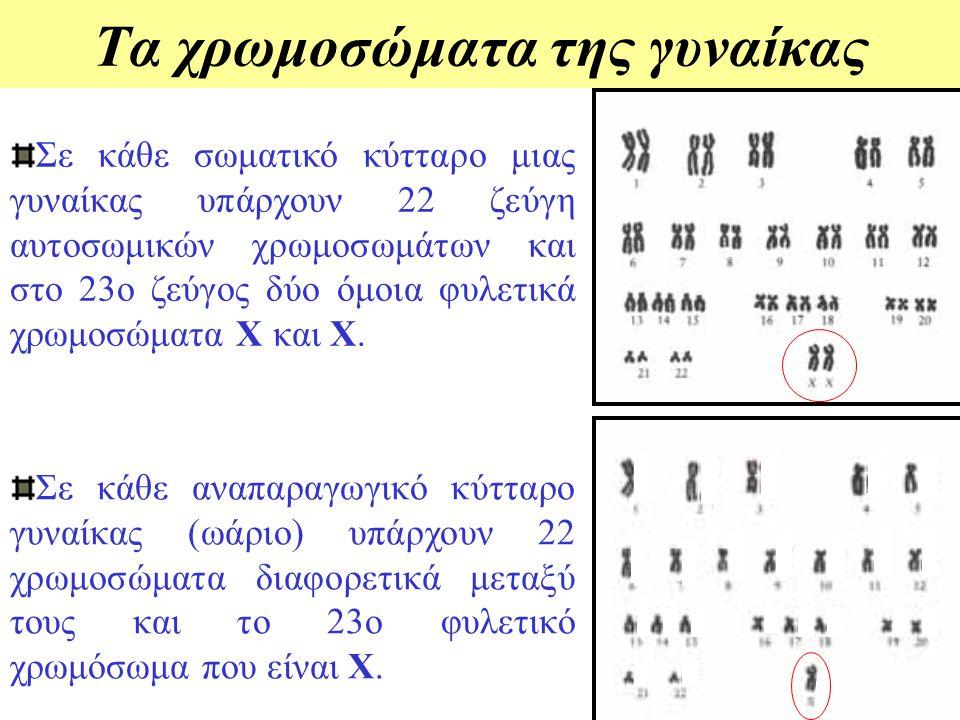 Τα χρωμοσώματα του άνδρα Σε κάθε αναπαραγωγικό κύτταρο άνδρα (σπερματοζωάριο) υπάρχουν 22 χρωμοσώματα διαφορετικά μεταξύ τους και το 23ο φυλετικό χρωμ