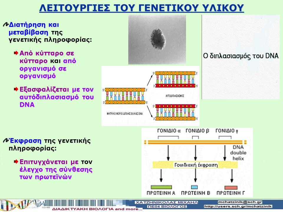 ΛΕΙΤΟΥΡΓΙΕΣ ΤΟΥ ΓΕΝΕΤΙΚΟΥ ΥΛΙΚΟΥ Διατήρηση και μεταβίβαση Διατήρηση και μεταβίβαση της γενετικής πληροφορίας: Από κύτταρο σε κύτταροαπό οργανισμό σε οργανισμό Από κύτταρο σε κύτταρο και από οργανισμό σε οργανισμό Εξασφαλίζεταιμε τον αυτόδιπλασιασμό του DNA Εξασφαλίζεται με τον αυτόδιπλασιασμό του DNA Έκφραση Έκφραση της γενετικής πληροφορίας: Επιτυγχάνεται με έλεγχο της σύνθεσης των πρωτεϊνών Επιτυγχάνεται με τον έλεγχο της σύνθεσης των πρωτεϊνών