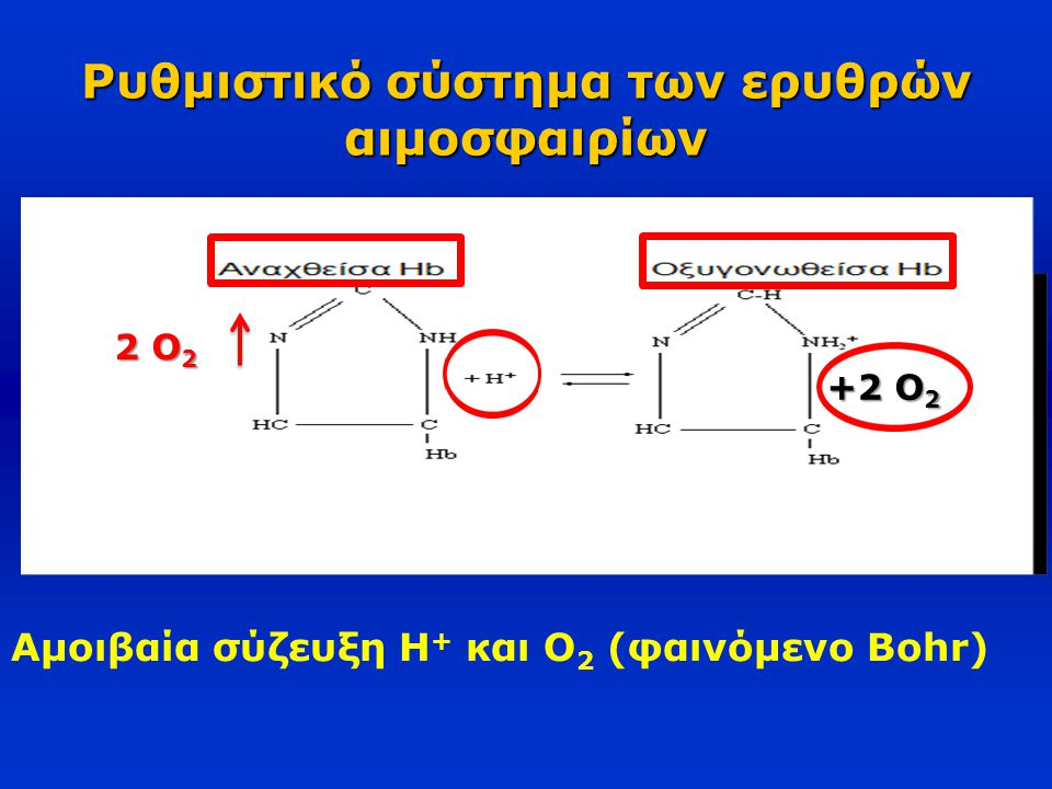 Ρυθμιστικό σύστημα των ερυθρών αιμοσφαιρίων 2 O 2 +2 O 2 Αμοιβαία σύζευξη H + και O 2 (φαινόμενο Bohr)