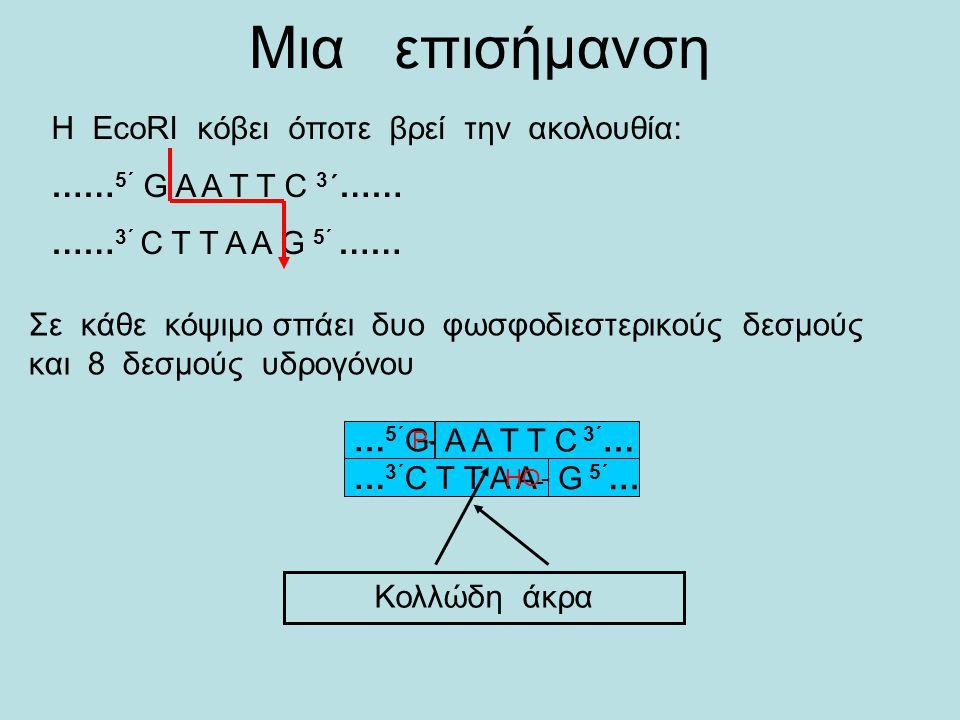 1.Απομόνωση DNA ευκαρυωτικού οργανισμού και πλασμιδίων 2.Κόψιμο τόσο του του γονιδιώματος του ευκαρυωτικού οργανισμού, όσο και του πλασμιδίου με την ί