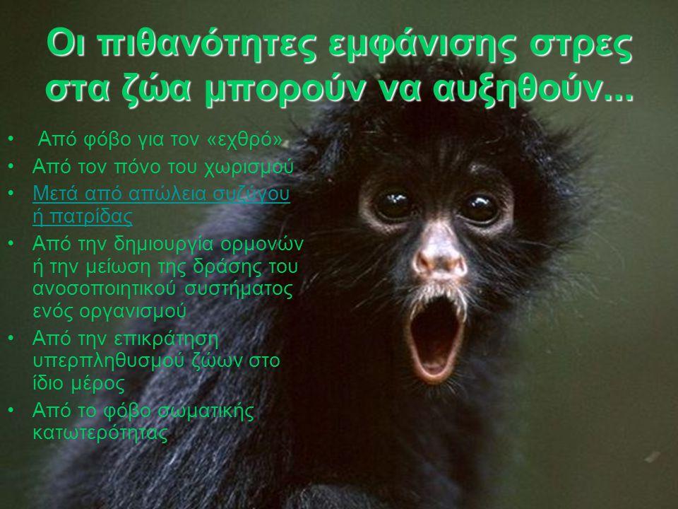 Οι πιθανότητες εμφάνισης στρες στα ζώα μπορούν να αυξηθούν... Από φόβο για τον «εχθρό» Από τον πόνο του χωρισμού Μετά από απώλεια συζύγου ή πατρίδαςΜε