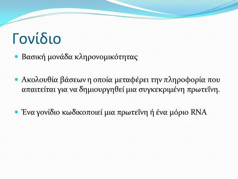 Γονίδιο Βασική μονάδα κληρονομικότητας Ακολουθία βάσεων η οποία μεταφέρει την πληροφορία που απαιτείται για να δημιουργηθεί μια συγκεκριμένη πρωτεΐνη.