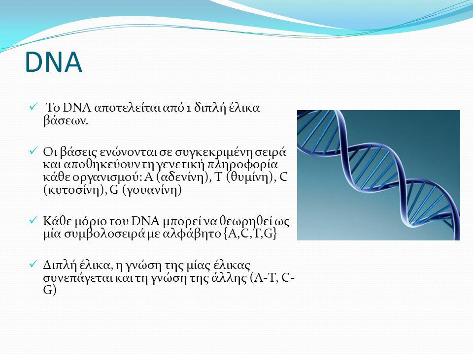 DNA Το DNA αποτελείται από 1 διπλή έλικα βάσεων. Οι βάσεις ενώνονται σε συγκεκριμένη σειρά και αποθηκεύουν τη γενετική πληροφορία κάθε οργανισμού: Α (