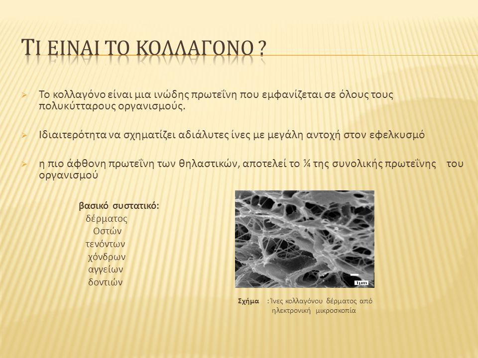  Το κολλαγόνο είναι μια ινώδης πρωτεΐνη που εμφανίζεται σε όλους τους πολυκύτταρους οργανισμούς.