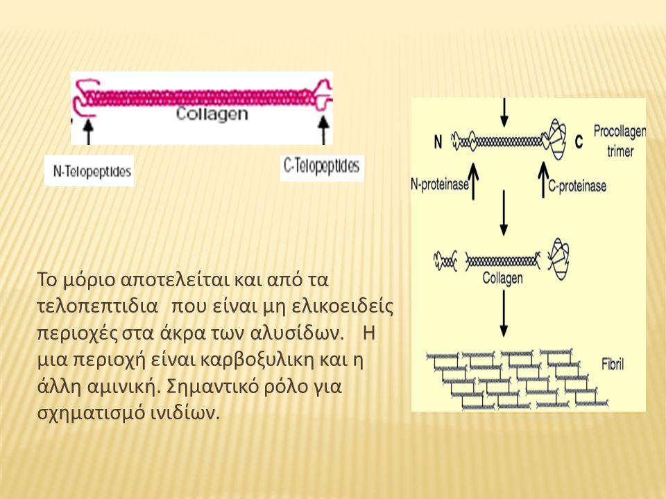 Το μόριο αποτελείται και από τα τελοπεπτιδια που είναι μη ελικοειδείς περιοχές στα άκρα των αλυσίδων.