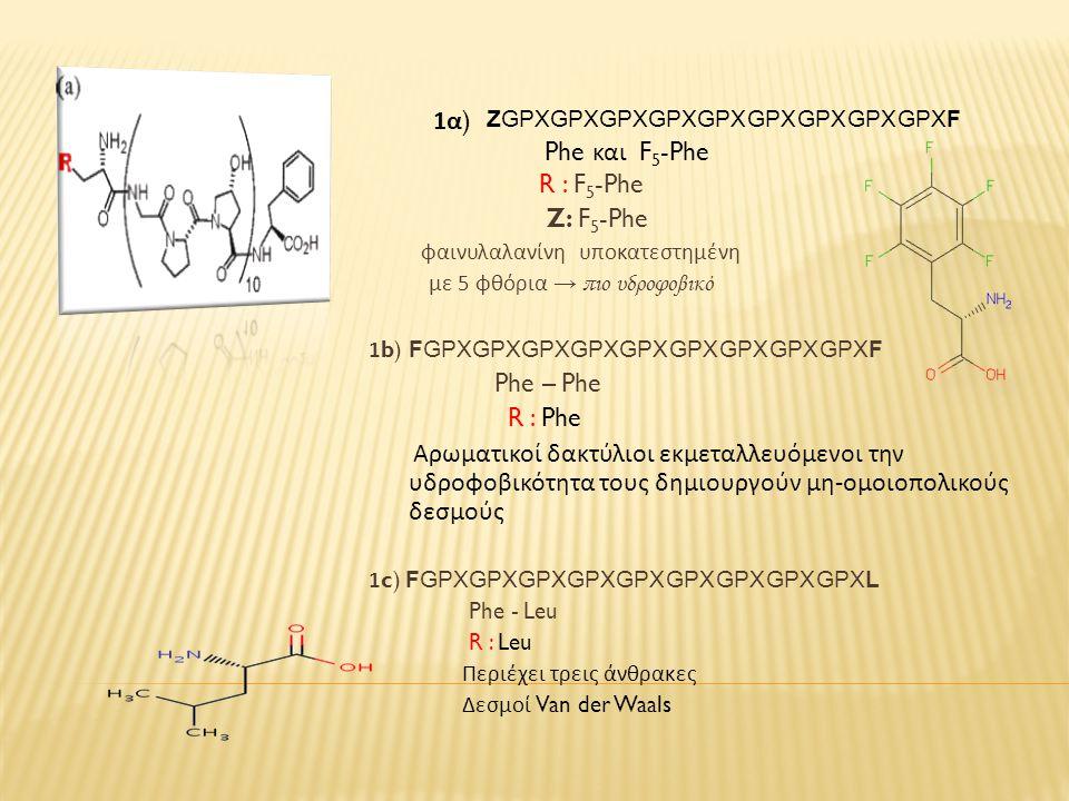 R : F 5 -Phe Z: F 5 -Phe φαινυλαλανίνη υποκατεστημένη με 5 φθόρια → πιο υδροφοβικό 1b) FGPXGPXGPXGPXGPXGPXGPXGPXGPXF Phe – Phe R : Phe Αρωματικοί δακτύλιοι εκμεταλλευόμενοι την υδροφοβικότητα τους δημιουργούν μη - ομοιοπολικούς δεσμούς 1c) FGPXGPXGPXGPXGPXGPXGPXGPXGPXL Phe - Leu R : Leu Περιέχει τρεις άνθρακες Δεσμοί Van der Waals 1 α ) Phe και F 5 -Phe ZGPXGPXGPXGPXGPXGPXGPXGPXGPXF