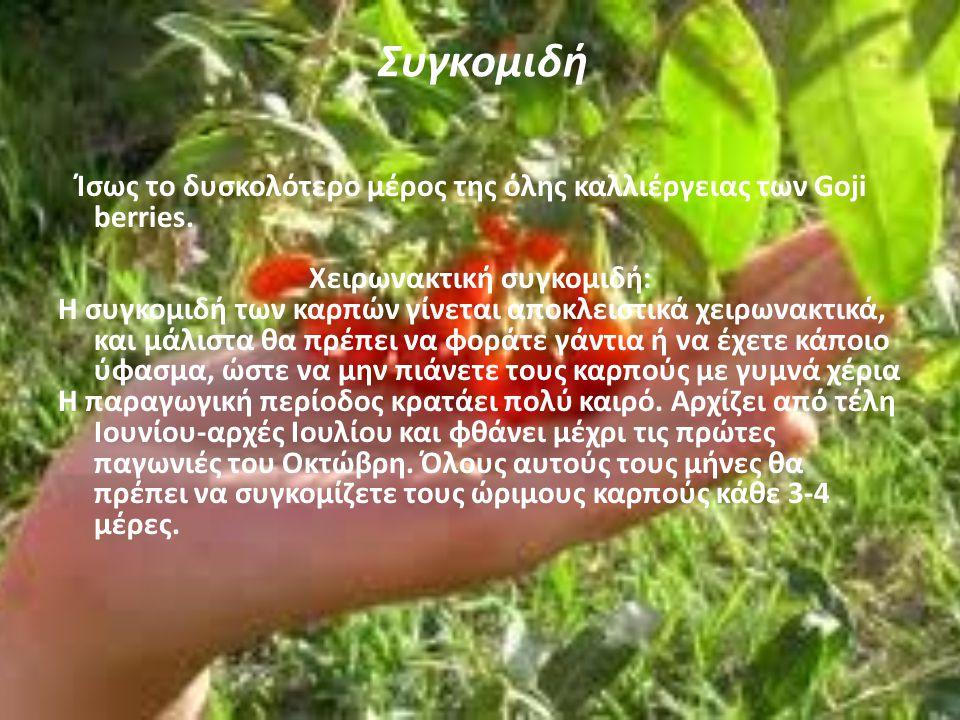 Καρποφορία Αν φυτέψετε τα φυτά σας νωρίς την άνοιξη, πιαθανότα προς το τέλος του καλοκαιριού θα γευτείτε τους πρώτους σας καρπούς Goji Berry! Θα είναι
