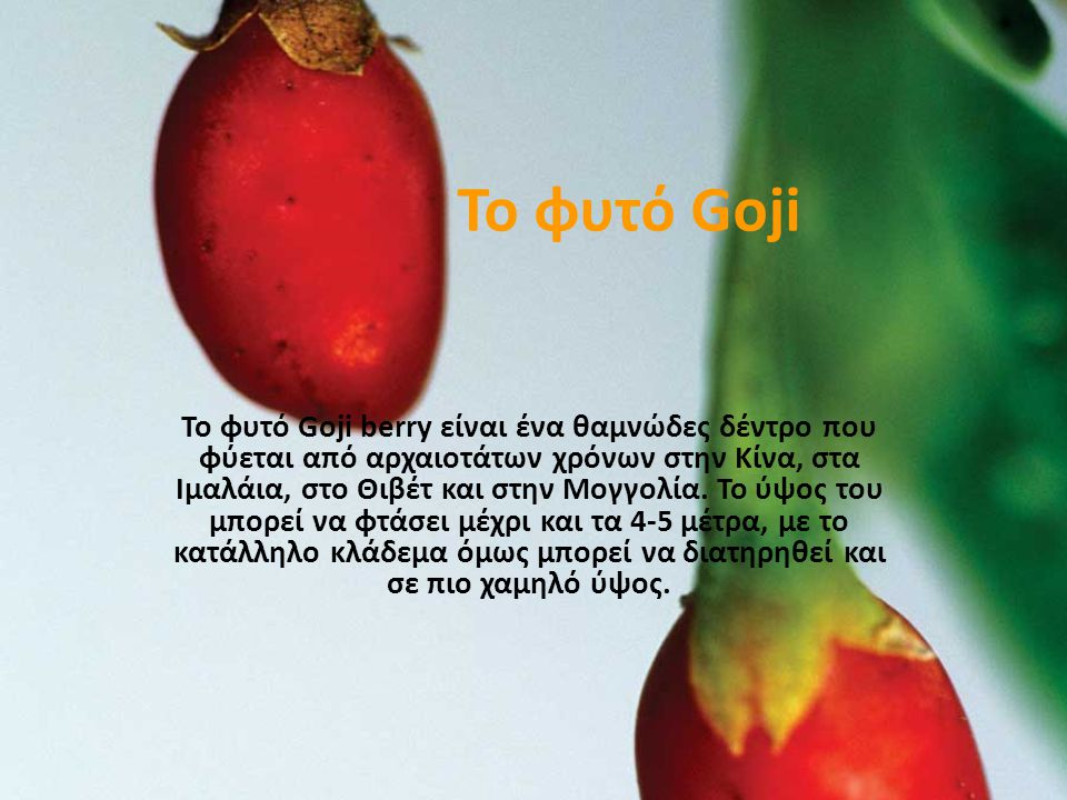Το φυτό Goji Το φυτό Goji berry είναι ένα θαμνώδες δέντρο που φύεται από αρχαιοτάτων χρόνων στην Κίνα, στα Ιμαλάια, στο Θιβέτ και στην Μογγολία.