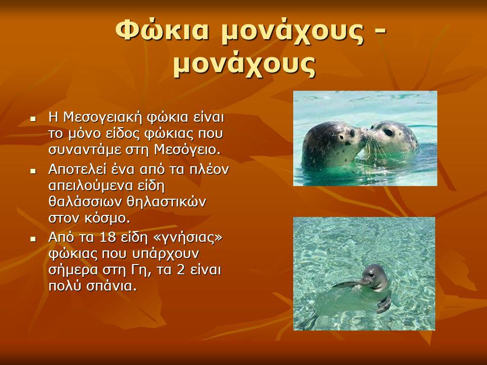 Φώκια μονάχους - μονάχους Φώκια μονάχους - μονάχους Η Μεσογειακή φώκια είναι το μόνο είδος φώκιας που συναντάμε στη Μεσόγειο. Η Μεσογειακή φώκια είναι