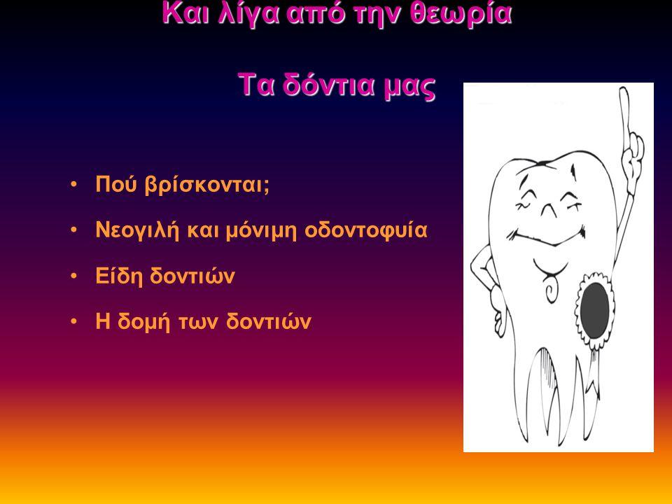 Και λίγα από την θεωρία Τα δόντια μας Πού βρίσκονται; Νεογιλή και μόνιμη οδοντοφυία Είδη δοντιών Η δομή των δοντιών