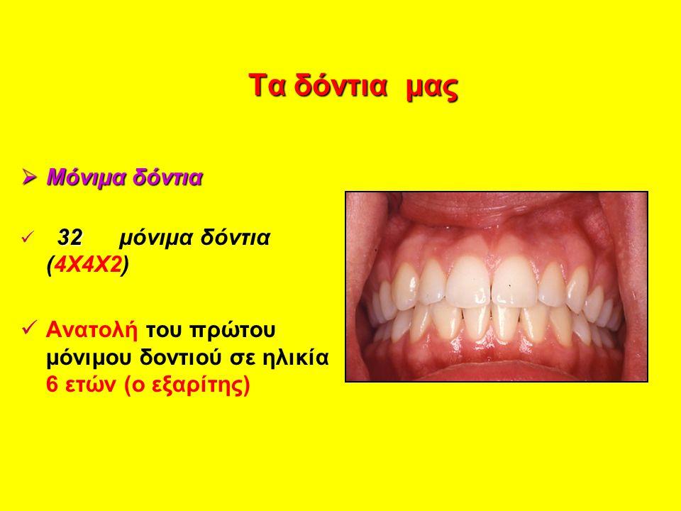 Τα δόντια μας Τα δόντια μας  Μόνιμα δόντια 32 32 μόνιμα δόντια (4Χ4Χ2) Ανατολή του πρώτου μόνιμου δοντιού σε ηλικία 6 ετών (ο εξαρίτης)