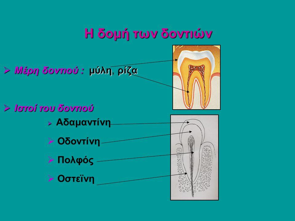 Η δομή των δοντιών  Μέρη δοντιού : μύληρίζα  Μέρη δοντιού : μύλη, ρίζα  Ιστοί του δοντιού   Αδαμαντίνη  Οδοντίνη  Πολφός  Οστεϊνη