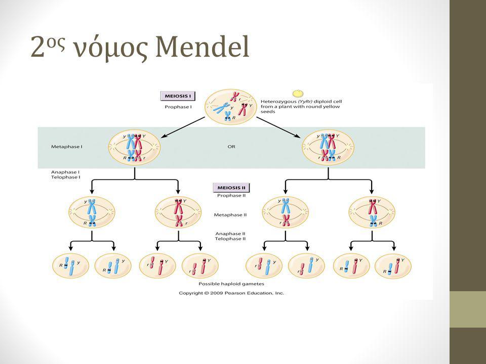 2 ος νόμος Mendel