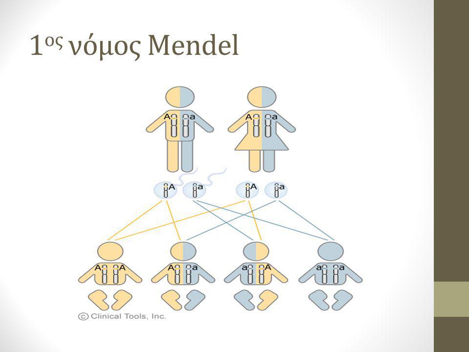 1 ος νόμος Mendel