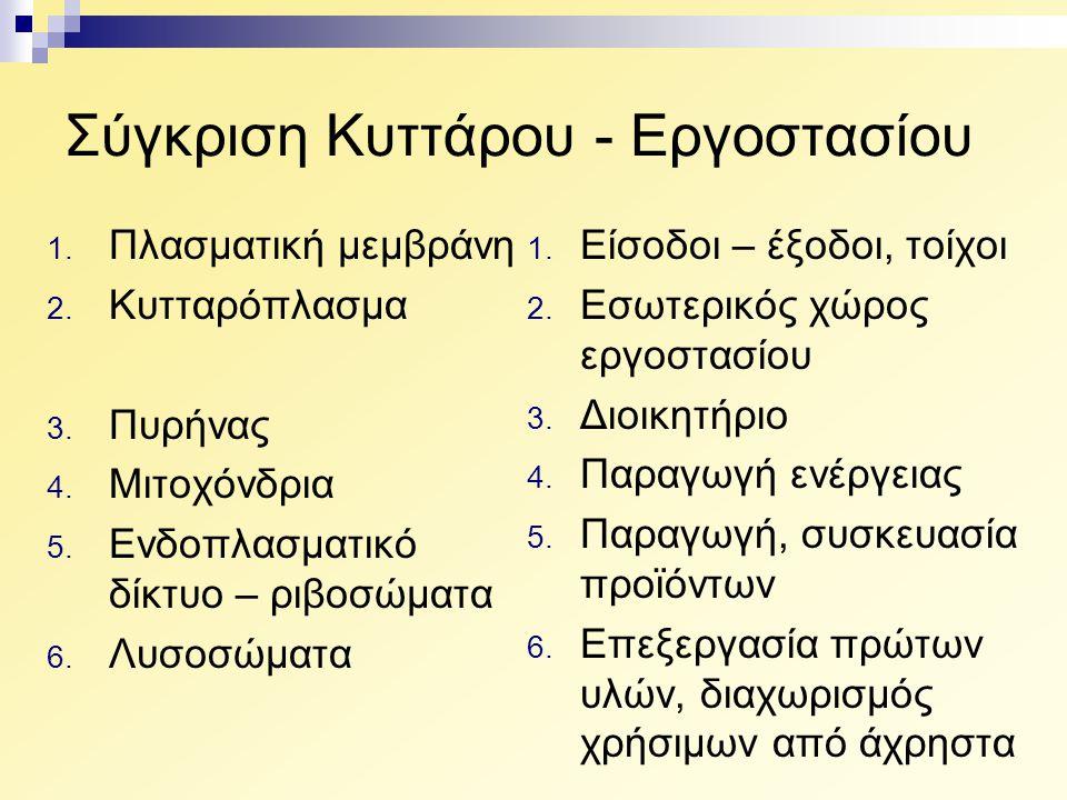 Σύγκριση Κυττάρου - Εργοστασίου 1. Πλασματική μεμβράνη 2. Κυτταρόπλασμα 3. Πυρήνας 4. Μιτοχόνδρια 5. Ενδοπλασματικό δίκτυο – ριβοσώματα 6. Λυσοσώματα