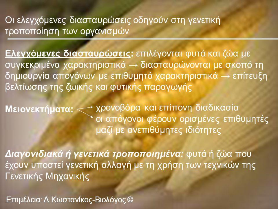 Επιμέλεια: Δ.Κωστανίκος-Βιολόγος © Οι ελεγχόμενες διασταυρώσεις οδηγούν στη γενετική τροποποίηση των οργανισμών Ελεγχόμενες διασταυρώσεις: επιλέγονται φυτά και ζώα με συγκεκριμένα χαρακτηριστικά → διασταυρώνονται με σκοπό τη δημιουργία απογόνων με επιθυμητά χαρακτηριστικά → επίτευξη βελτίωσης της ζωικής και φυτικής παραγωγής Μειονεκτήματα: Διαγονιδιακά ή γενετικά τροποποιημένα: φυτά ή ζώα που έχουν υποστεί γενετική αλλαγή με τη χρήση των τεχνικών της Γενετικής Μηχανικής χρονοβόρα και επίπονη διαδικασία οι απόγονοι φέρουν ορισμένες επιθυμητές μαζί με ανεπιθύμητες ιδιότητες
