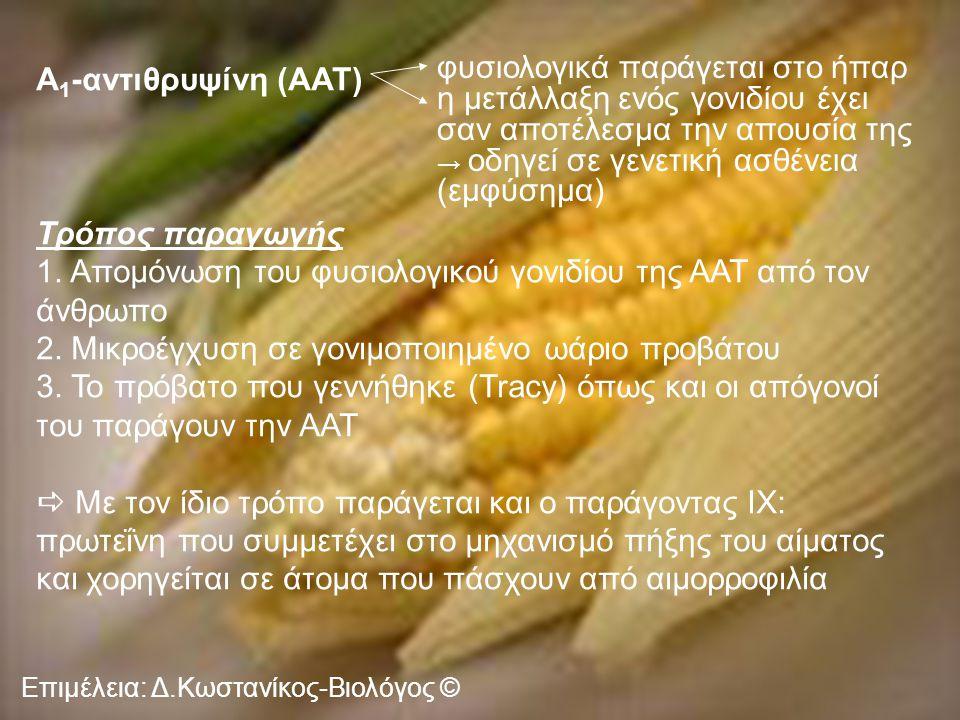 Επιμέλεια: Δ.Κωστανίκος-Βιολόγος © Α 1 -αντιθρυψίνη (AAT) Τρόπος παραγωγής 1. Απομόνωση του φυσιολογικού γονιδίου της ΑΑΤ από τον άνθρωπο 2. Μικροέγχυ
