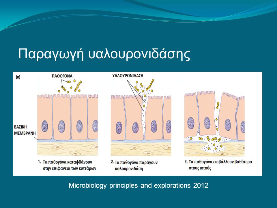 Microbiology principles and explorations 2012 Παραγωγή υαλουρονιδάσης