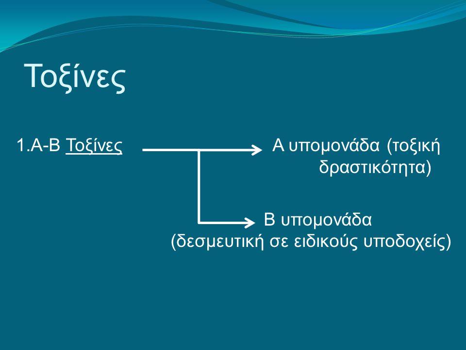 Τοξίνες 1.Α-Β Τοξίνες Α υπομονάδα (τοξική δραστικότητα) Β υπομονάδα (δεσμευτική σε ειδικούς υποδοχείς)