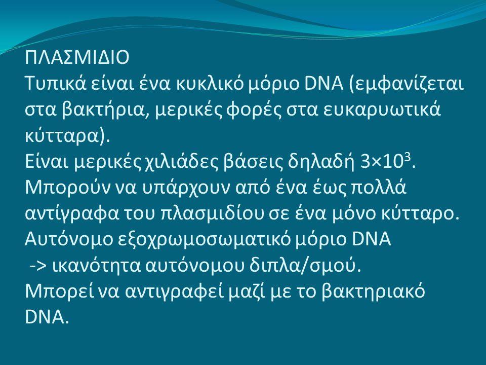 ΠΛΑΣΜΙΔΙΟ Τυπικά είναι ένα κυκλικό μόριο DNA (εμφανίζεται στα βακτήρια, μερικές φορές στα ευκαρυωτικά κύτταρα). Είναι μερικές χιλιάδες βάσεις δηλαδή 3