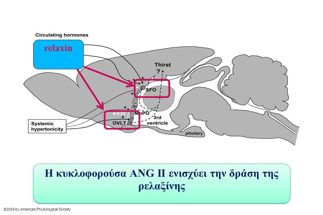 ©2004 by American Physiological Society relaxin Η κυκλοφορούσα ΑNG II ενισχύει την δράση της ρελαξίνης