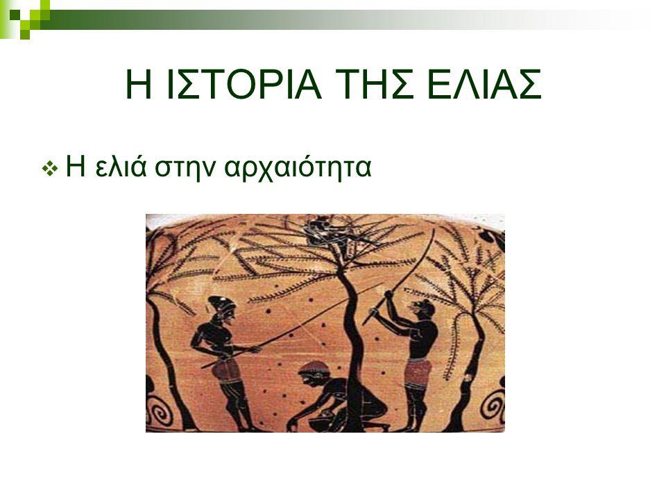 Η ΙΣΤΟΡΙΑ ΤΗΣ ΕΛΙΑΣ  Η ελιά στην αρχαιότητα