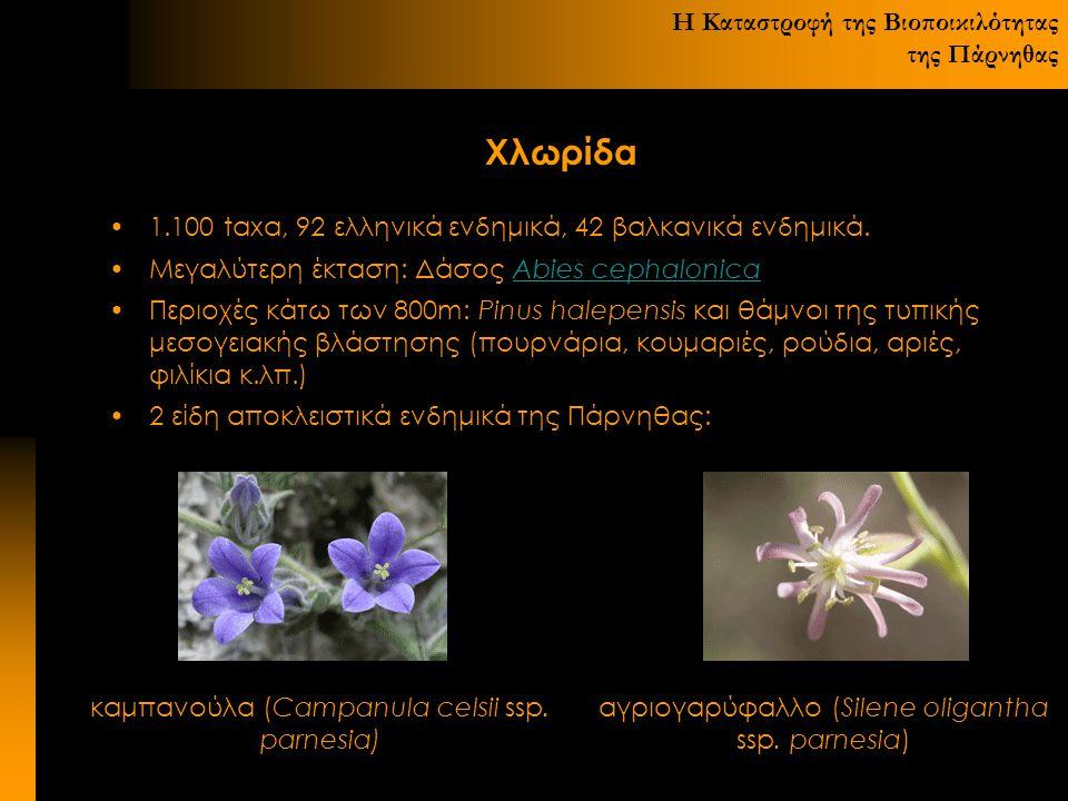 Η Καταστροφή της Βιοποικιλότητας της Πάρνηθας Χλωρίδα 1.100 taxα, 92 ελληνικά ενδημικά, 42 βαλκανικά ενδημικά. Μεγαλύτερη έκταση: Δάσος Abies cephalon