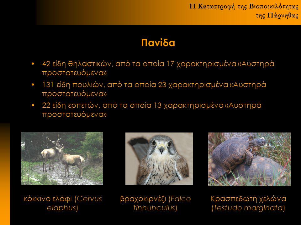 Η Καταστροφή της Βιοποικιλότητας της Πάρνηθας Πανίδα 42 είδη θηλαστικών, από τα οποία 17 χαρακτηρισμένα «Αυστηρά προστατευόμενα» 131 είδη πουλιών, από