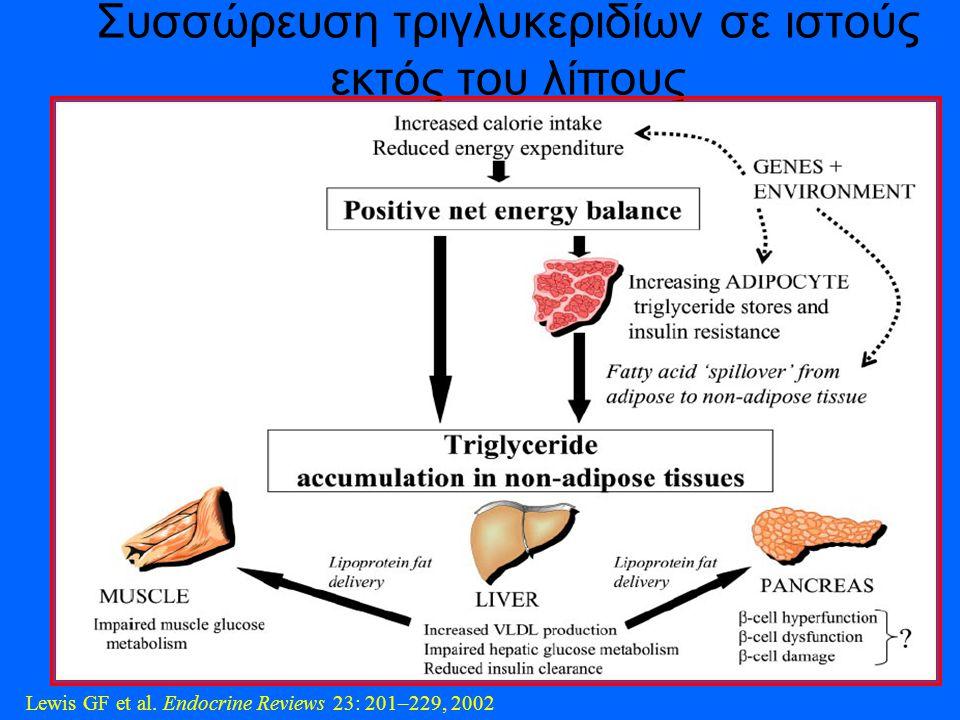 Συσσώρευση τριγλυκεριδίων σε ιστούς εκτός του λίπους Lewis GF et al. Endocrine Reviews 23: 201–229, 2002