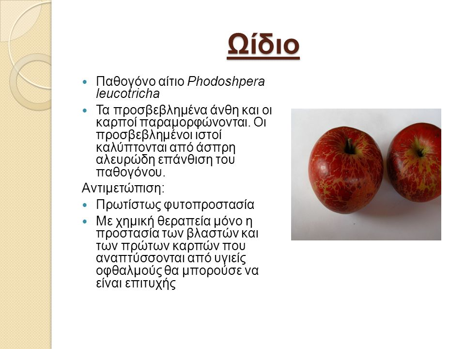Ωίδιο Παθογόνο αίτιο Phodoshpera leucotricha Τα προσβεβλημένα άνθη και οι καρποί παραμορφώνονται.