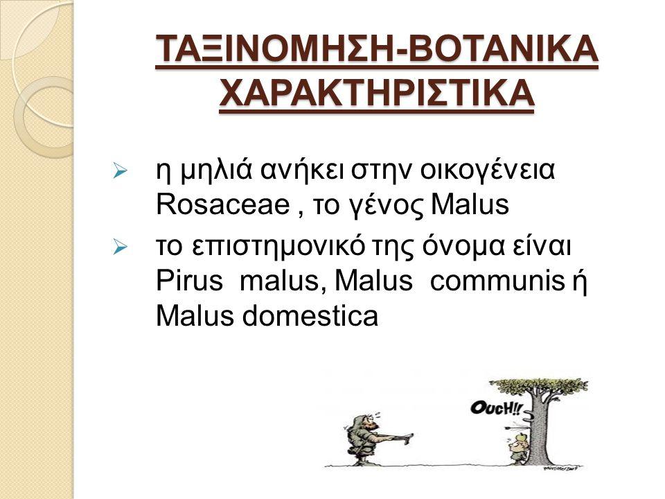 ΤΑΞΙΝΟΜΗΣΗ-ΒΟΤΑΝΙΚΑ ΧΑΡΑΚΤΗΡΙΣΤΙΚΑ  η μηλιά ανήκει στην οικογένεια Rosaceae, το γένος Malus  το επιστημονικό της όνομα είναι Pirus malus, Malus communis ή Malus domestica