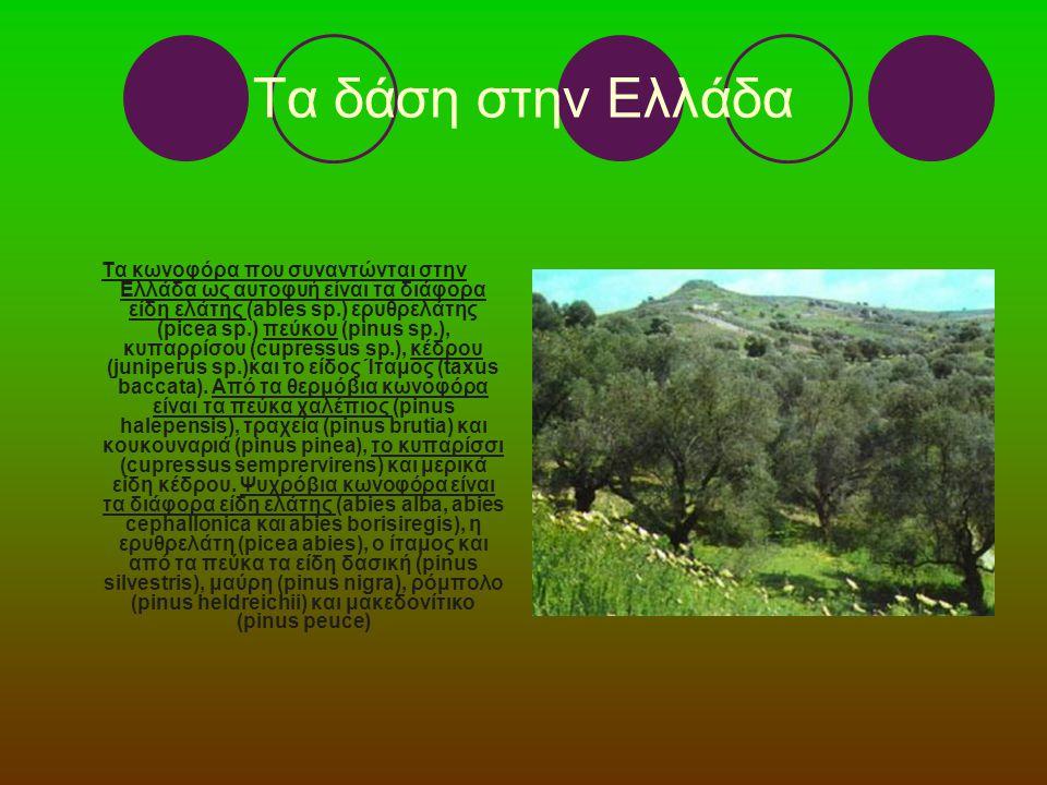 Τα δάση στην Ελλάδα Τα κωνοφόρα που συναντώνται στην Ελλάδα ως αυτοφυή είναι τα διάφορα είδη ελάτης (ables sp.) ερυθρελάτης (picea sp.) πεύκου (pinus