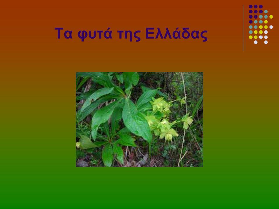 Τα φυτά της Ελλάδας