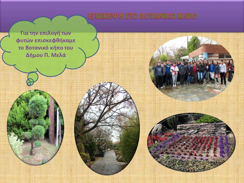 Για την επιλογή των φυτών επισκεφθήκαμε το Βοτανικό κήπο του Δήμου Π. Μελά