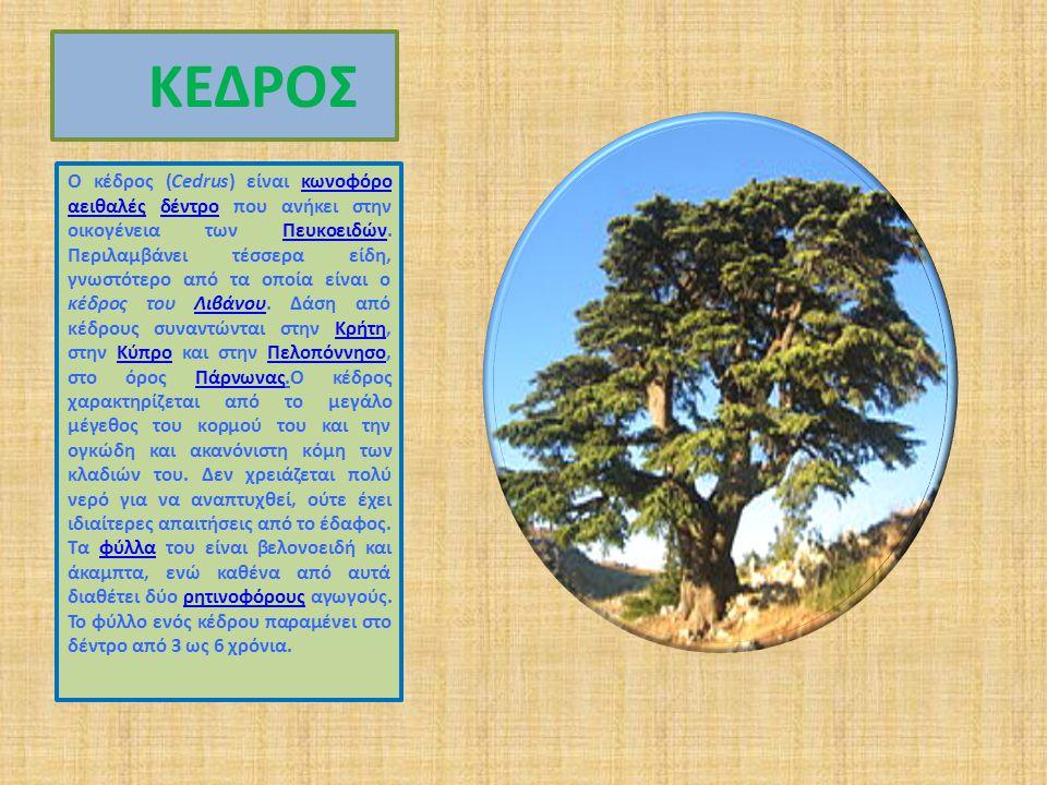 ΚΕΔΡΟΣ Ο κέδρος (Cedrus) είναι κωνοφόρο αειθαλές δέντρο που ανήκει στην οικογένεια των Πευκοειδών.