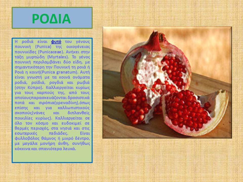 ΡΟΔΙΑ Η ροδιά είναι φυτό του γένους πουνική (Punica) της οικογένειας πουνικίδες (Punicaceae).