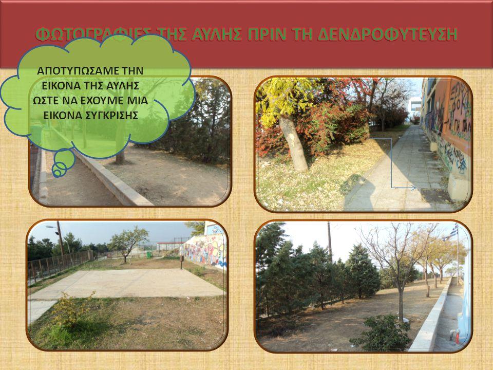 ΕΛΙΑ Η ελιά ή ελαιόδενδρο είναι γένος καρποφόρων δεντρων της οικογένειας των Ελαιοειδών,το οποίο συναντάται πόλύ συχνά και στην Ελλάδα.Είναι δέντρο αειθαλές, έχει φύλλα αντίθετα, λογχοειδή, δερματώδη, σκουροπράσινα στην άνω επιφάνεια και αργυρόχροα στην κάτω.