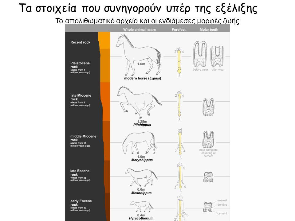 Tα στοιχεία που συνηγορούν υπέρ της εξέλιξης Το απολιθωματικό αρχείο και οι ενδιάμεσες μορφές ζωής
