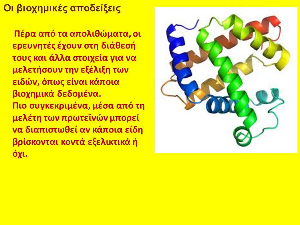 Οι βιοχημικές αποδείξεις Πέρα από τα απολιθώματα, οι ερευνητές έχουν στη διάθεσή τους και άλλα στοιχεία για να μελετήσουν την εξέλιξη των ειδών, όπως