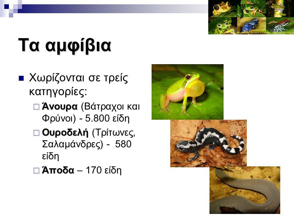 Τα αμφίβια Χωρίζονται σε τρείς κατηγορίες:  Άνουρα  Άνουρα (Βάτραχοι και Φρύνοι) - 5.800 είδη  Ουροδελή  Ουροδελή (Τρίτωνες, Σαλαμάνδρες) - 580 εί